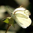 Angel of Light by Lisa Putman