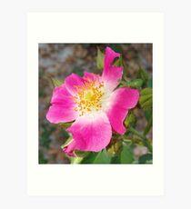 Swamp Rose (Rosa palustris var. scandens) and friend Art Print
