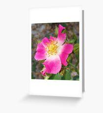 Swamp Rose (Rosa palustris var. scandens) and friend Greeting Card