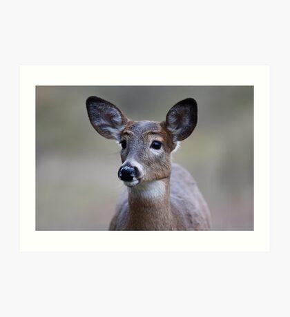 So forlorn - White-tailed Deer Art Print