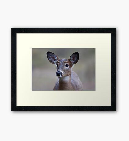 So forlorn - White-tailed Deer Framed Print