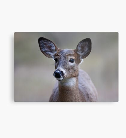 So forlorn - White-tailed Deer Metal Print