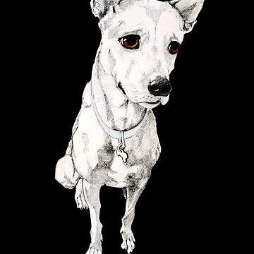 Malaysian Dog by mrana