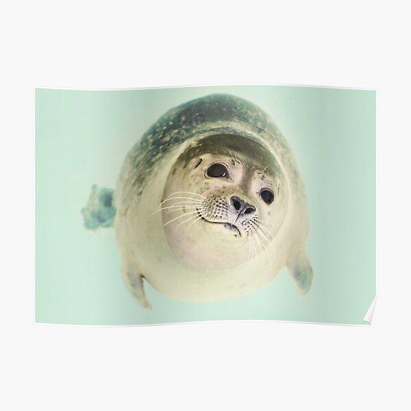 Curious Seal Poster