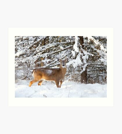 Young White-tailed Buck in snow Art Print
