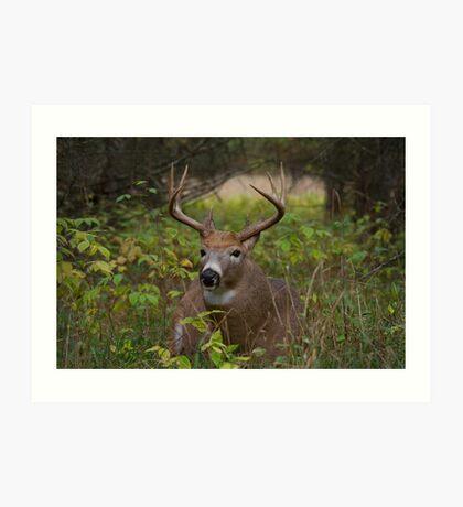 Bullet Buck Takes a Break - White-tailed Deer Art Print