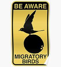 MONTY PYTHON BIRD COCONUT Poster