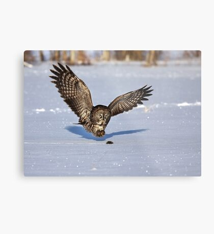 Great Grey owl catches a mouse Metal Print