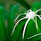 Tropical flower by Dmitry Rostovtsev