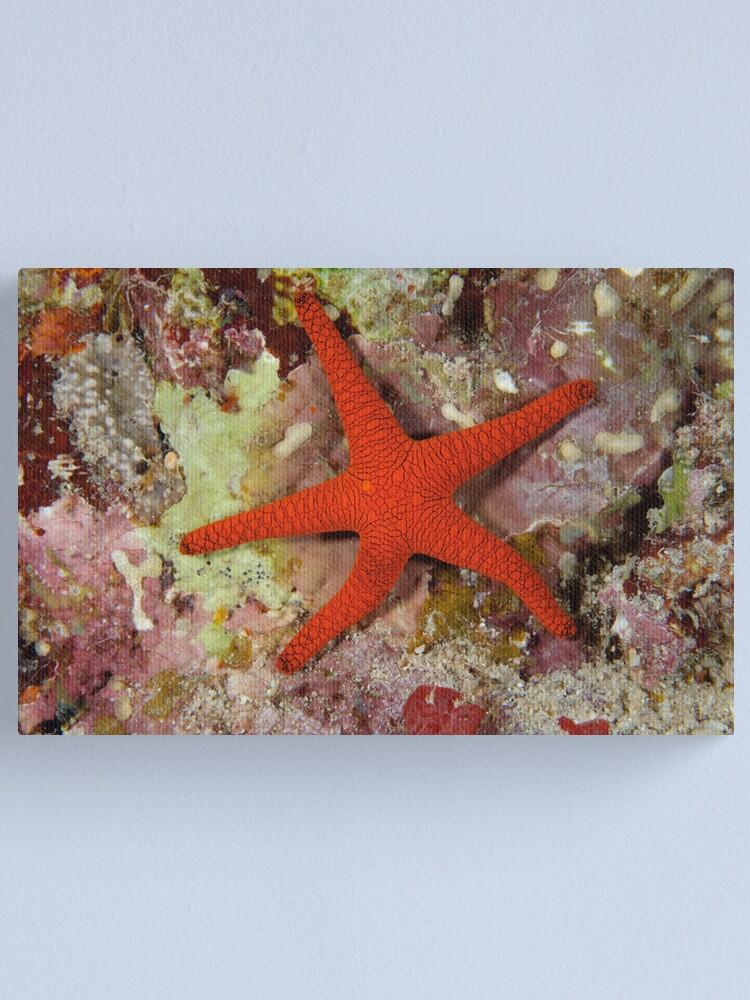 Alternate view of Sea Star Canvas Print
