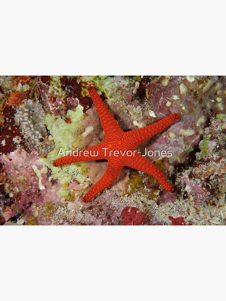 Sea Star by andrewtj