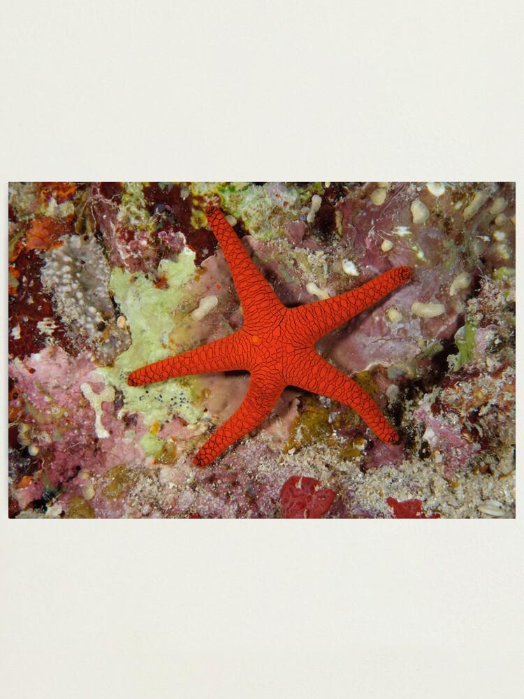 Alternate view of Sea Star Photographic Print