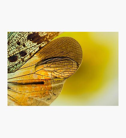 On the Wild Wing of Dawn Photographic Print