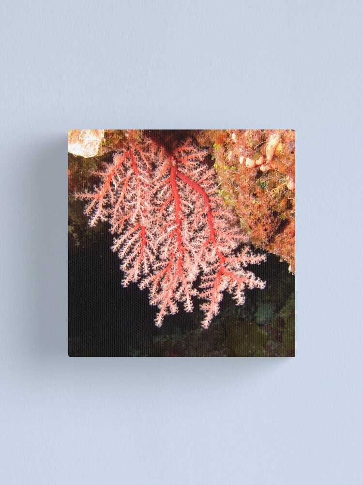 Alternate view of Soft Coral Canvas Print