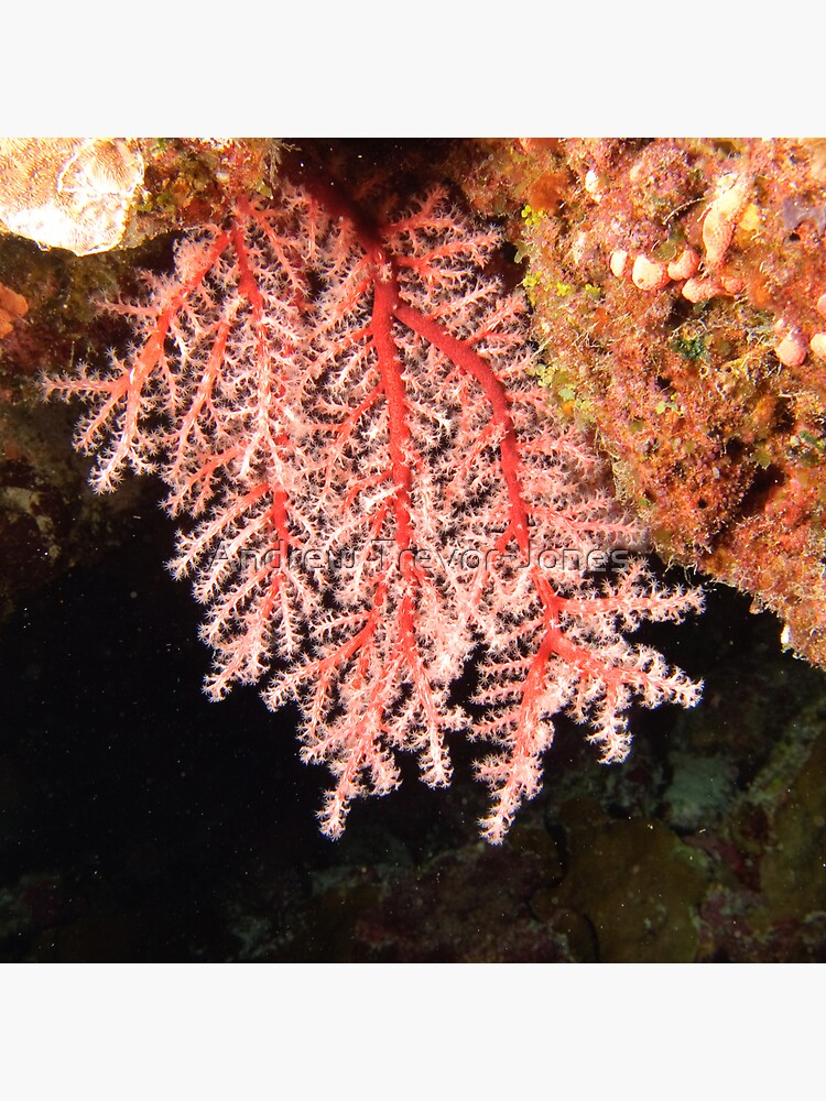 Soft Coral by andrewtj