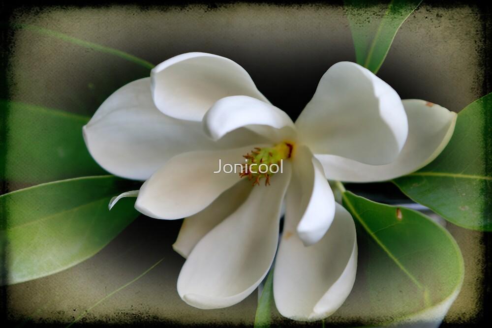 Sweet Bay Magnolia by Jonicool