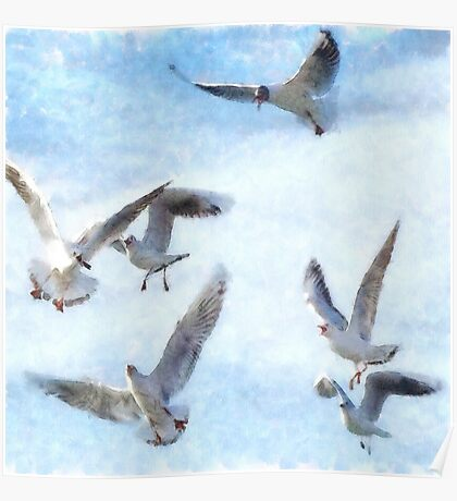 Gulls In Flight Watercolor Poster