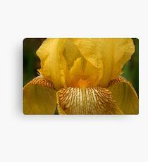Yellow Iris Canvas Print