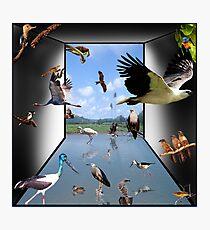 Birds - Yes! Photographic Print