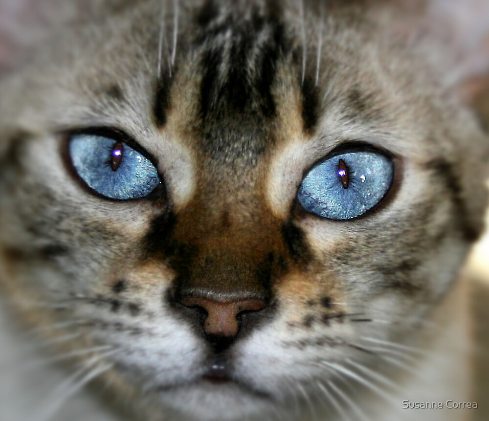 pretty blue 2 by Susanne Correa
