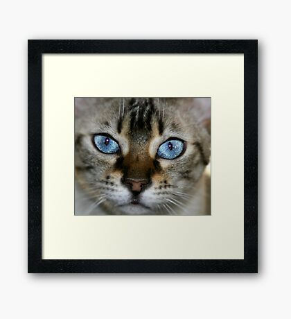 pretty blue 2 Framed Print