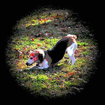 Estiramiento de Beagle Basset Hound de AllisonKe