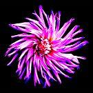 Electro Floral Fun by creativevibe