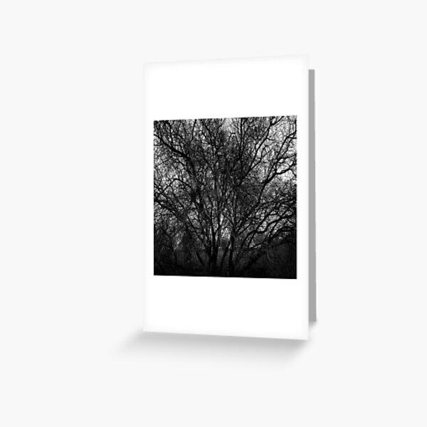 Trees in Flinders-22 Greeting Card