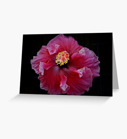 Red Ballerina Hibiscus Greeting Card