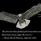 Eagle and Thoreau quote by Branwen Drew