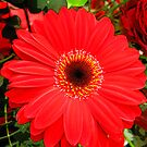 Red Flower Number Two by Yvonne Carsley