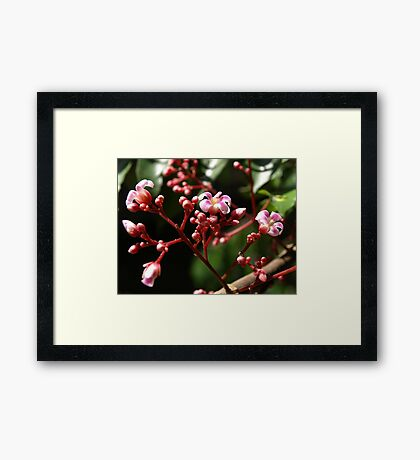 Flowers of the Star Fruit Tree Framed Print