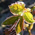 Rose Leaf Crystals by pat oubridge