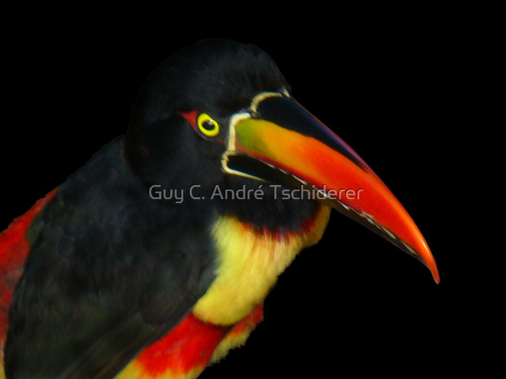Tucan by Guy C. André Tschiderer