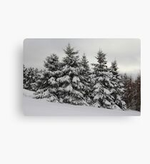 Winter White Canvas Print