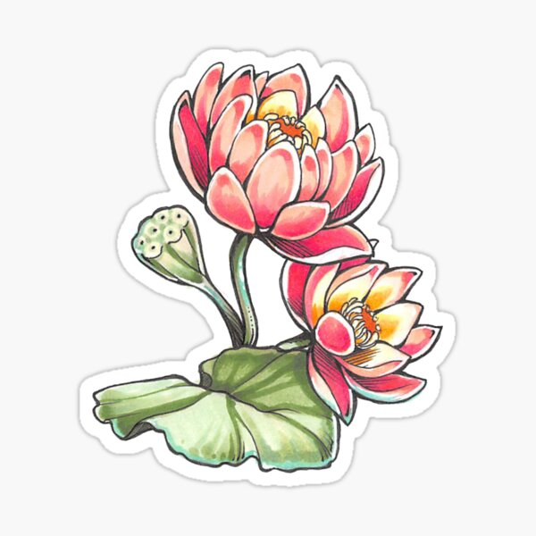 Lotus Blossoms Sticker