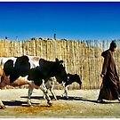 One Man Leading One and a Half Cows by Mark Ross