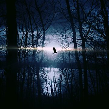 Night flight by FORESTKAT
