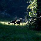 Morning Strut by J. Scott Coile