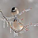 Winter Retreat II by J. Scott Coile