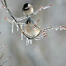 Winter Retreat by J. Scott Coile