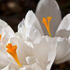 Spring Begins by BCasTal