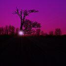 Entish Sunset Purple Haze by velveteagle