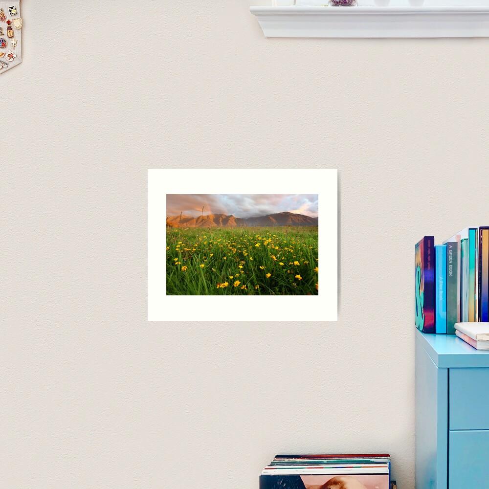 Wild Flowers, Fox Glacier Valley, South Island, New Zealand Art Print