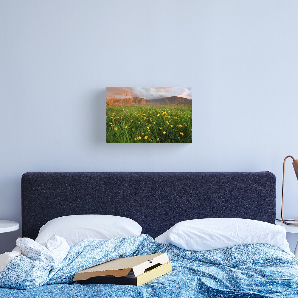 Wild Flowers, Fox Glacier Valley, South Island, New Zealand Canvas Print