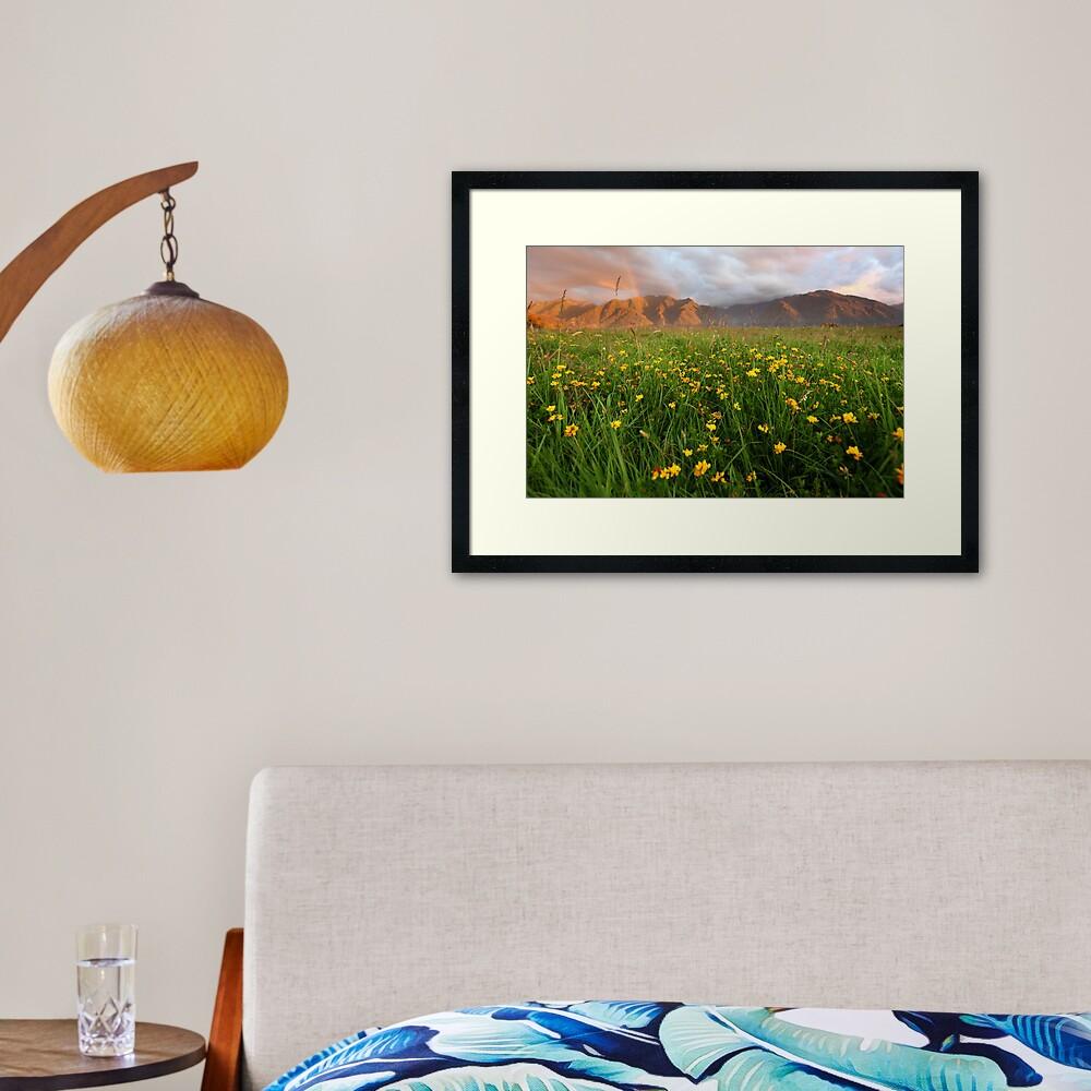 Wild Flowers, Fox Glacier Valley, South Island, New Zealand Framed Art Print