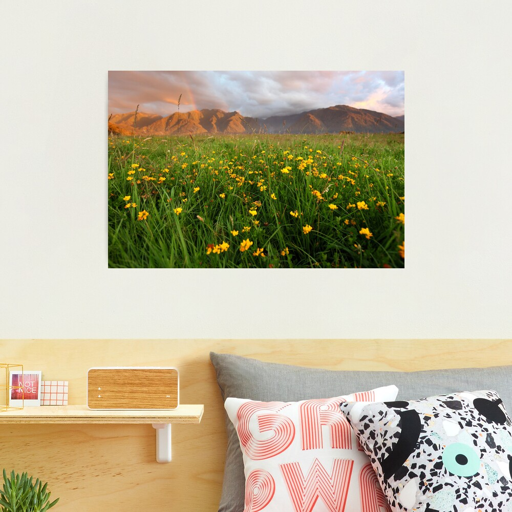 Wild Flowers, Fox Glacier Valley, South Island, New Zealand Photographic Print