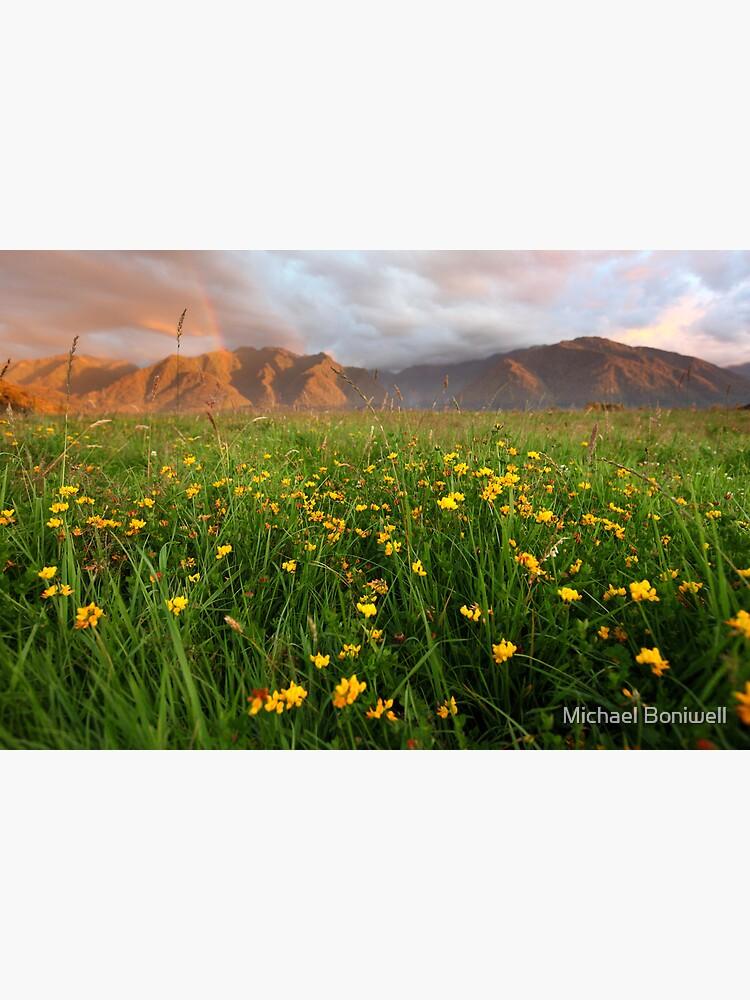 Wild Flowers, Fox Glacier Valley, South Island, New Zealand by Chockstone