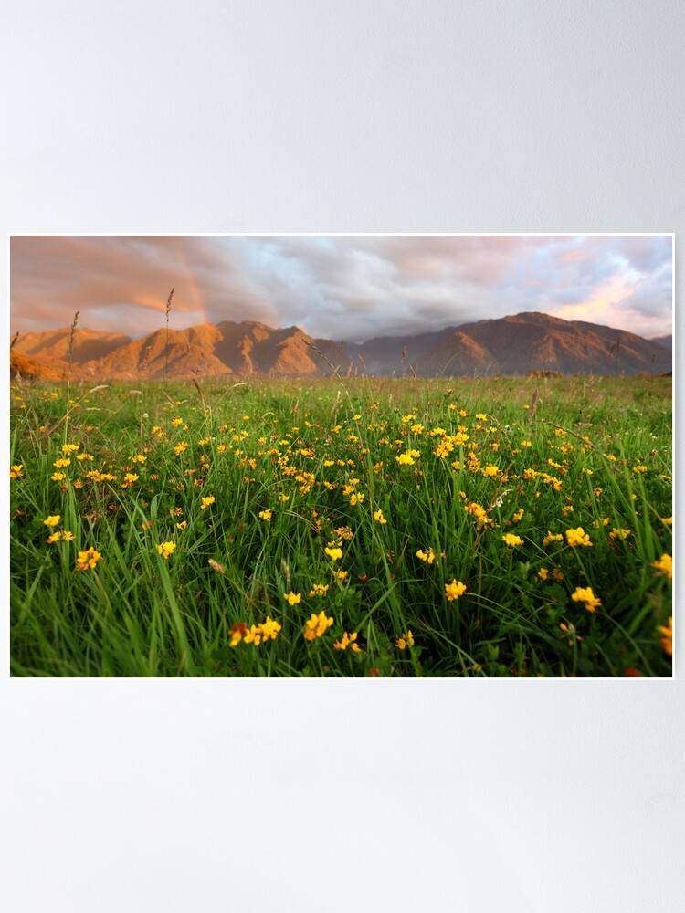 Alternate view of Wild Flowers, Fox Glacier Valley, South Island, New Zealand Poster