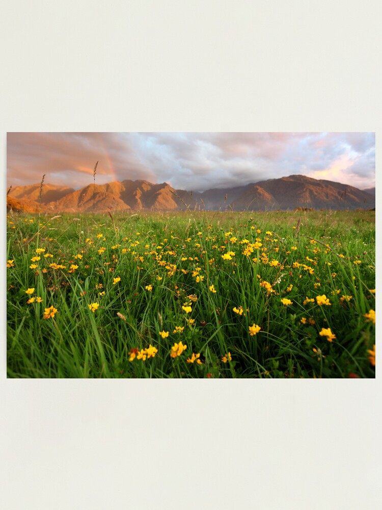 Alternate view of Wild Flowers, Fox Glacier Valley, South Island, New Zealand Photographic Print